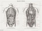 Internal Organs In Human Anatomy Wood Engravings Published ...