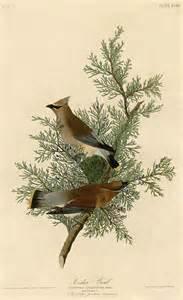 Audubon Bird Paintings