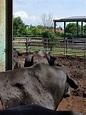 防檢局:牛結節疹疫情可能擴散 下午說明因應 | 生活 | 重點新聞 | 中央社 CNA