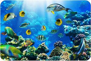 Aquatic Biomes ( Read ) | Biology | CK-12 Foundation