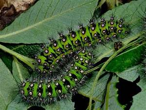 10 Facts About Caterpillars