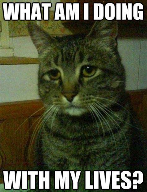 funny cat memes     lol