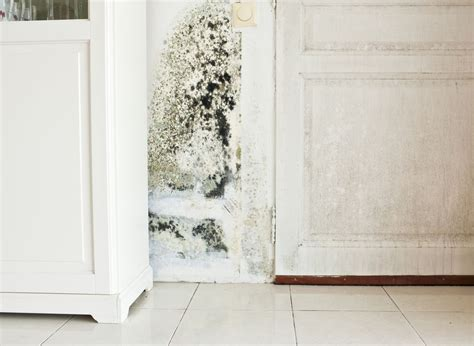 avoid dangerous mold growth   laundry room