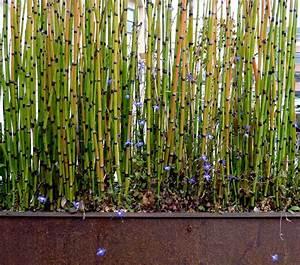 Balcone Decorazione Zen