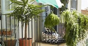 Plantes D Hiver Extérieur Balcon : quelles plantes grimpantes pour un balcon marie claire ~ Nature-et-papiers.com Idées de Décoration