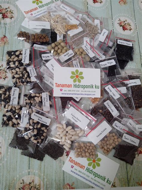 Jual Kit Hidroponik Surabaya jual benih sayuran hidroponik di surabaya tanaman
