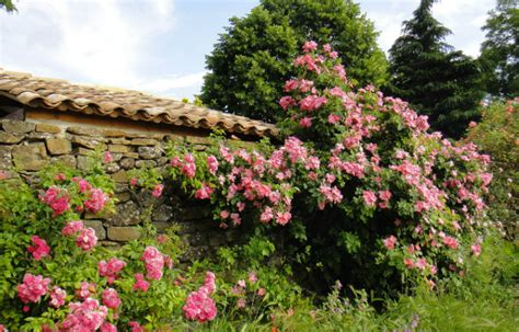 planter un rosier en pot 28 images planter un rosier 224 racines nues comment et quand
