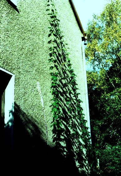 baumfällung im eigenen garten baumf 228 llung im eigenen garten baum garten hauck baumpflege baumf llung oder baumpflege mit den