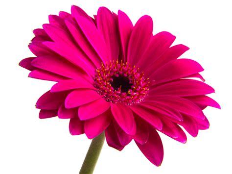 Flower Image Flower Free Images At Clker Vector Clip