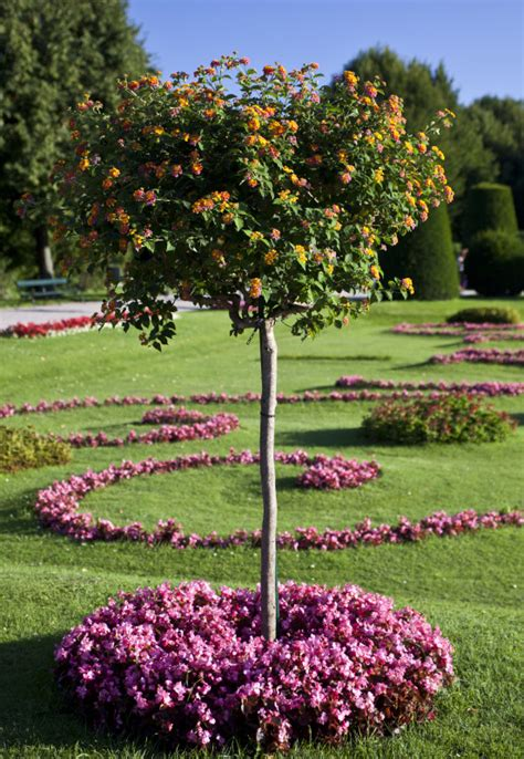 small flowering trees design scaping pictures of small trees for landscaping