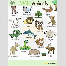 Wild Animal Vocabulary In English  Eslbuzz Learning English