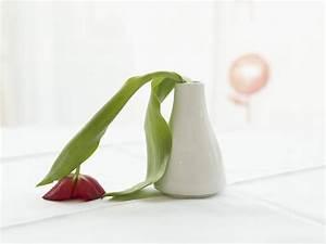 Tulpen In Vase : frage antwort nr 369 hilft blumenfrisch wirklich n ~ Orissabook.com Haus und Dekorationen