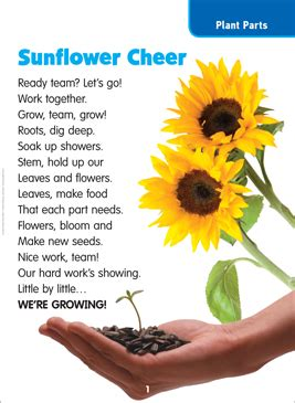 sunflower cheer science poem printable lesson plans