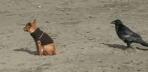 Shocked Dog GIF - Find & Share on GIPHY