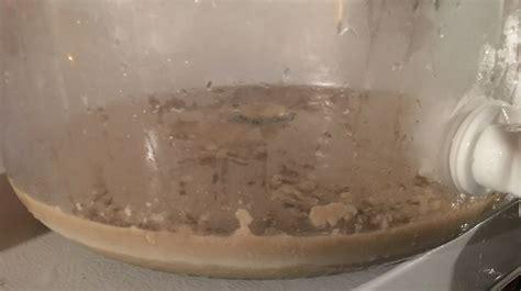 yeast pitch rate pt  yeast cake  yeast starter