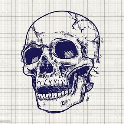 Skull Sketch Drawn Hand Anatomy Vector Illustration
