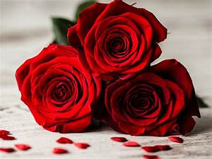 1 Rote Rose Bedeutung : die bedeutung von roten rosen welche rosenfarbe hat welche ~ Whattoseeinmadrid.com Haus und Dekorationen