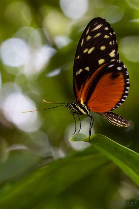 Botanischer Garten München Schmetterlinge by Sonderausstellung Tropische Schmetterlinge Im Botmuc