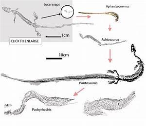Image Gallery Snake Ancestors