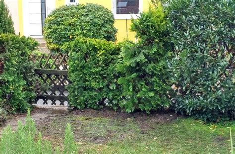 Sichtschutz Im Garten Gestalten Pflanzen Pflegen by Thuja Hecke Pflanzen Und Pflegen Der Wohnsinn