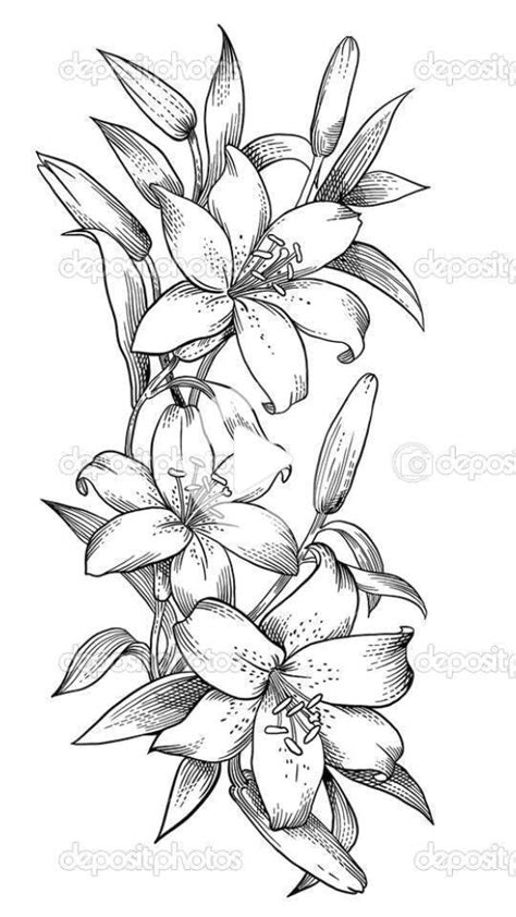Orchideenskizzen in 2020 | Flower drawing, Flower art