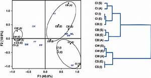 Discrimination Of The Four Calliptamus Species Using