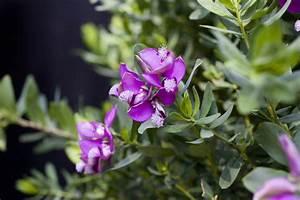 Feng Shui Pflanzen Reichtum : energien ihrer zimmerpflanzen ~ Markanthonyermac.com Haus und Dekorationen
