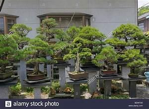 Bonsai Kaufen Berlin : privat gef hrte gro e bonsai garten in sasayama japan asien stockfoto bild 25768797 alamy ~ Orissabook.com Haus und Dekorationen