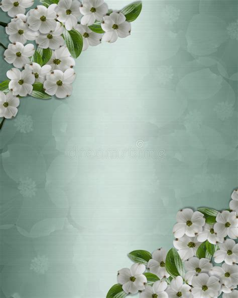 dogwood flowers background stock illustration