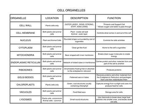 image result  cell organelles   functions chart