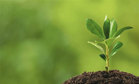 plant  roots    grow creating brand