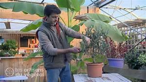 Tailler Un Citronnier : comment tailler en nuage un olivier en pot youtube ~ Melissatoandfro.com Idées de Décoration