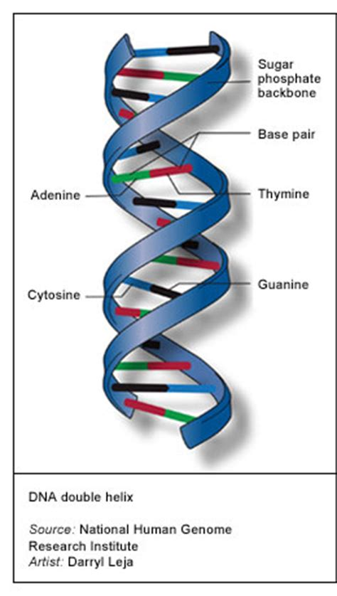 Staircase Method by Laboratory Methods Used For Medical Lab Testing Lab