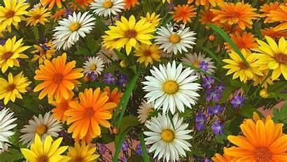 Wildflowers Screensaver 3d Wallpapers Backgrounds Wallpaperaccess