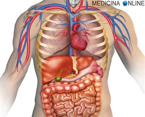 Corpo Umani Organi Interni Si Pu 242 Vivere Senza Pancreas Conseguenze Della