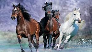 Galloping Horse Desktop Background Images Widescreen ...