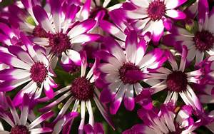 Pretty Purple Flowers wallpaper
