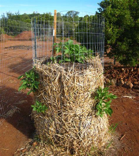 Vertical Potato Growing