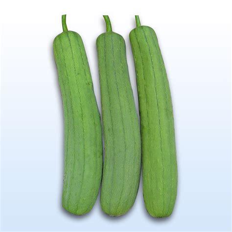 ESPAŇOLA F1 Hybrid Smooth Patola - Allied Botanical