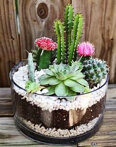 Comment Entretenir Un Cactus : terrarium pour plantes tuto pour le faire et plus de 70 ~ Nature-et-papiers.com Idées de Décoration