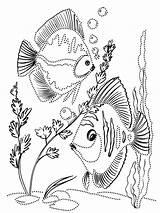 Aquarium Fish Coloring Ausmalbilder Fische Mycoloring Malvorlagen Ausdrucken Kostenlos Zum sketch template