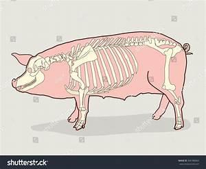 Pig Skeleton Vector Illustration Pig Skeleton Stock Vector