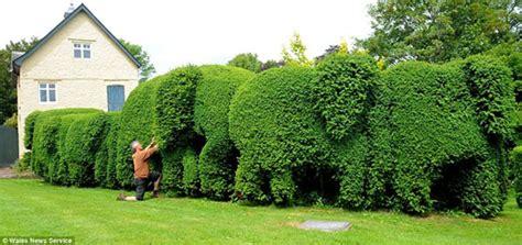 shrubbery art topiary outdoorthemecom
