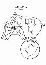 Elephant Circus Coloring Pages Getcolorings Books sketch template
