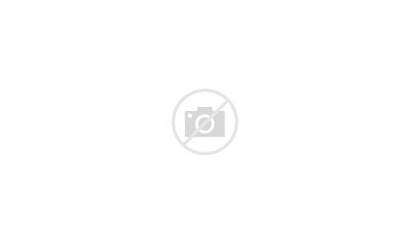 Caniche Poodle Dog Perros Petplan Glaucoma Suffer