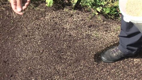 putting in a new lawn how to seed a lawn youtube