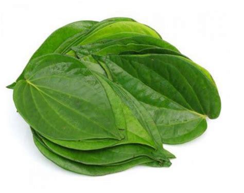 tanaman herbal di sekitar kita yang banyak manfaatnya