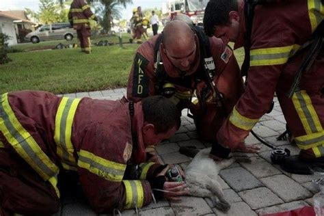 Animals Being Rescued (27 Pics
