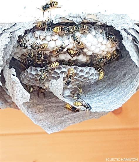 was tun gegen vögel unterm dach wespennest entfernen hausmittel wespennest selbst