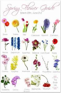 Best 20+ Types Of Flowers Ideas On Pinterest   Peony ...